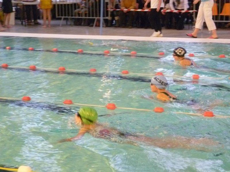 Org de natation adulte